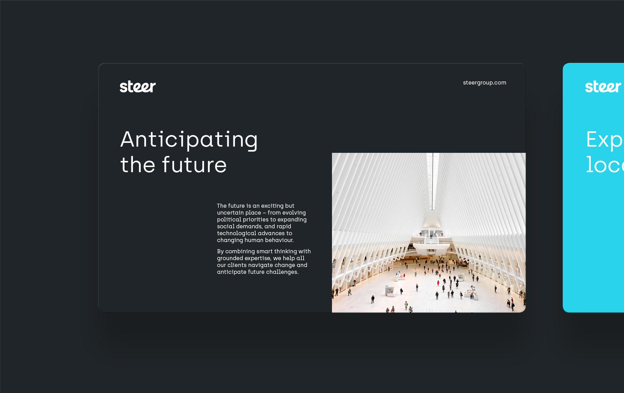 Steer-Large-2